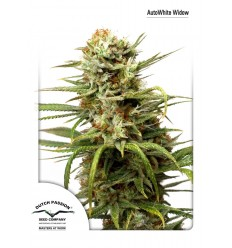 AutoWhite Widow / Dutch Passion