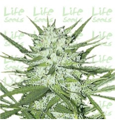 Early Skunk / Life Seeds