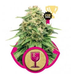 Critical / Royal Queen Seeds
