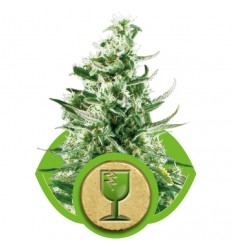Royal Critical Automatic / Royal Queen Seeds