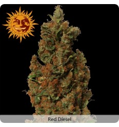 Red Diesel / Barney's Farm