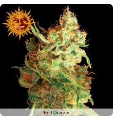 Red Dragon / Barney's Farm