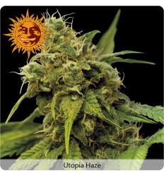 Utopia Haze / Barney's Farm