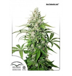 Auto Cinderella Jack / Dutch Passion