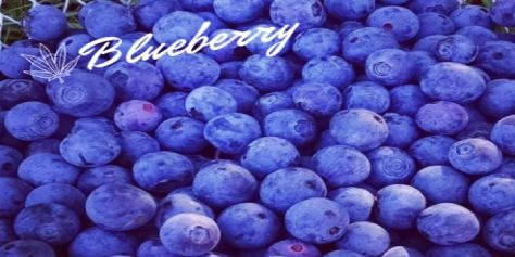Słodka Blueberry